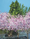 Cherry trees by Mark Ghyselinck CSC